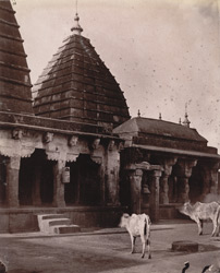 General view of minor temples, Deoghar (or Baijnath), Sonthal Parganas. 1003500